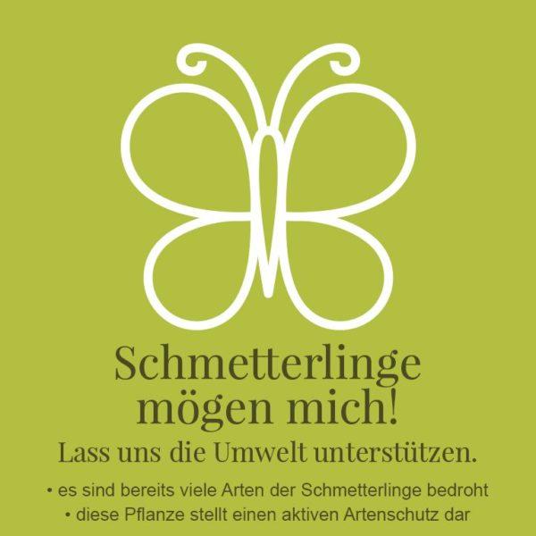 01_Lay_Bild_gross_Schmetterling_768x768px[49736]